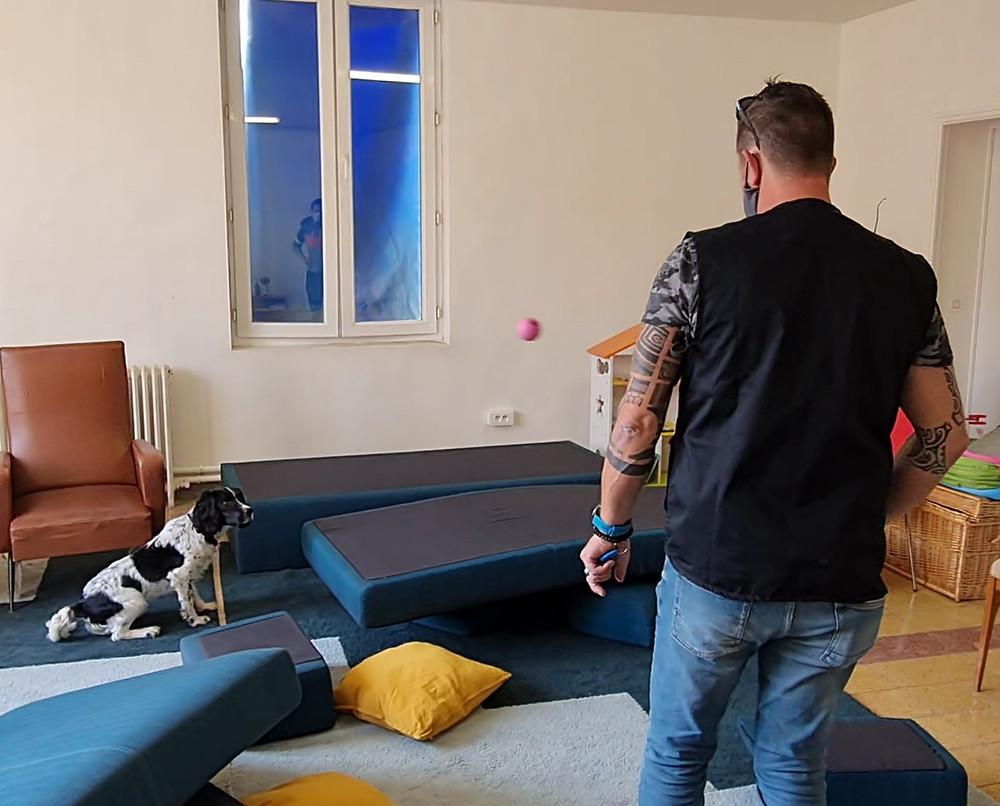 K9Detect - Société de détection canine des punaises de lit à Marseille - Région Paca