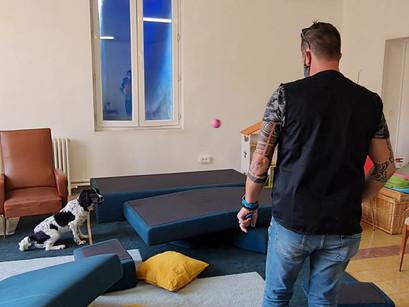 La détection avec un chien des punaises de lit à Marseille