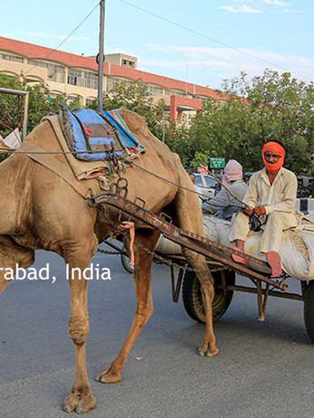 camel traffic.jpg