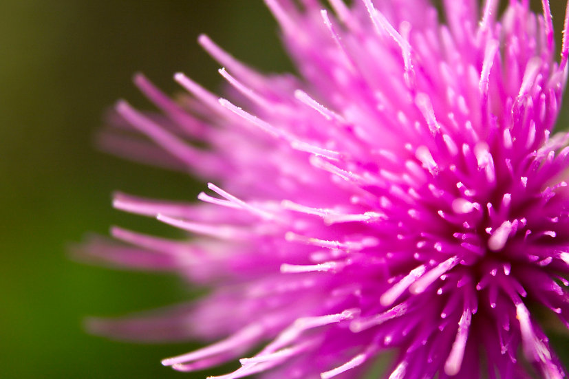 Nature's Geometry - Pink Flower