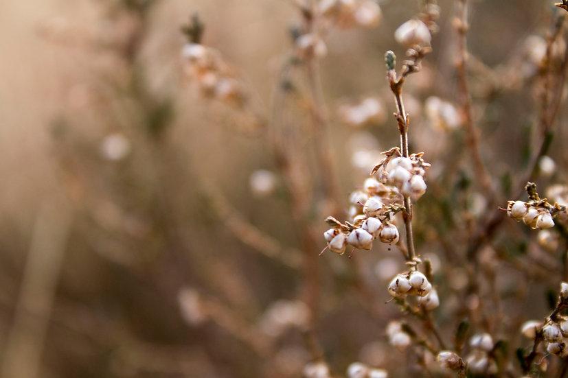 Nature's Beauty - Moorland
