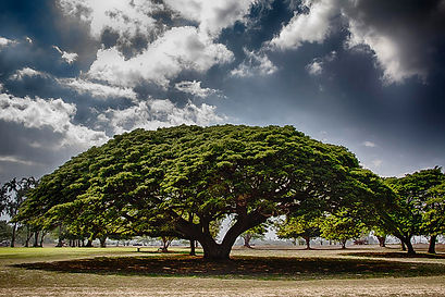Herbal Nutritionalist in Maui Hawaii