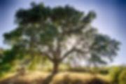 Tree Planting Home.jpg
