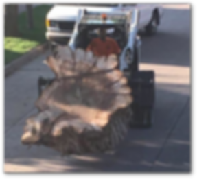 Stump Removal Services.png