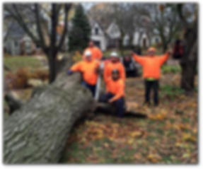 Tree Removal Services.png