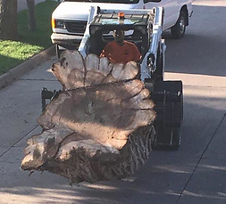 Stump Removal Home.png