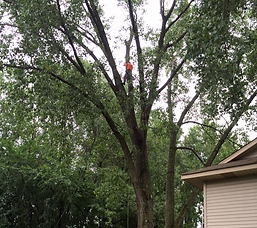 Tree Trimming Home.png