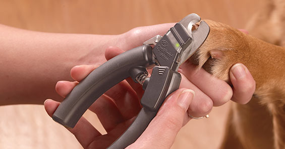 a-2848_How-to-Trim-Dog's-Nails