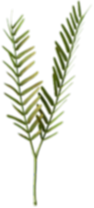 Real Leaves - FoxAndBear - 72dpi-108.png