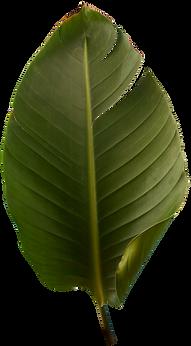 Real Leaves - FoxAndBear - 72dpi-084.png