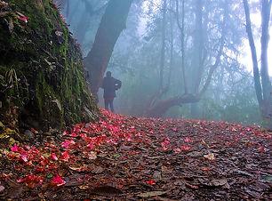 Barsey Rhododendron Sanctuary.jpg