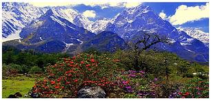 Singba Rhododendron sanctuary.jpg