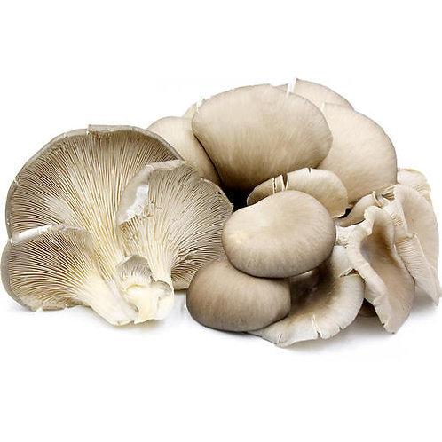 Oyster Mushroom - 500 g