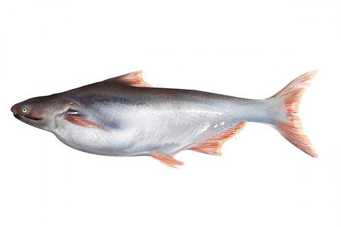 Basa Fish - 1 Kg