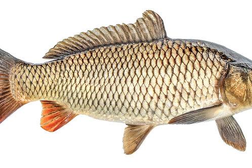 Carp Fish - 1 Kg