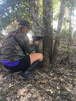 Setting up camera traps in the Pantanal