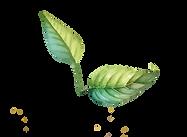 Dos Hojas - Transparent 2 leaves.png