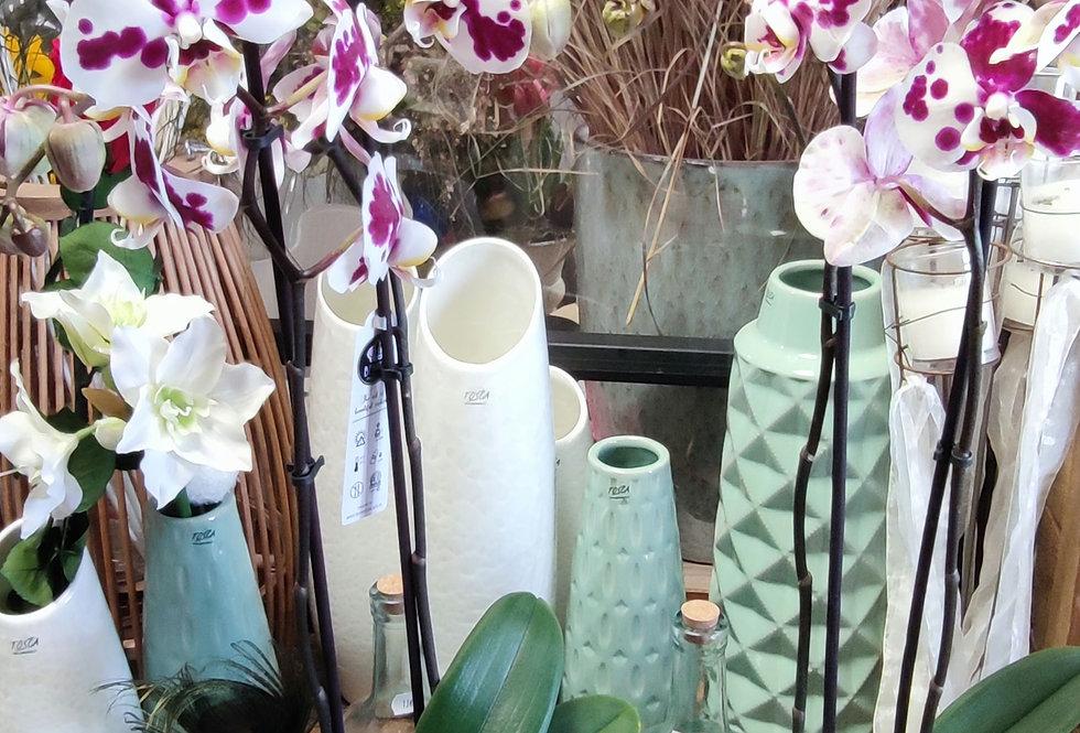 Orchidée tachetée blanche et prune