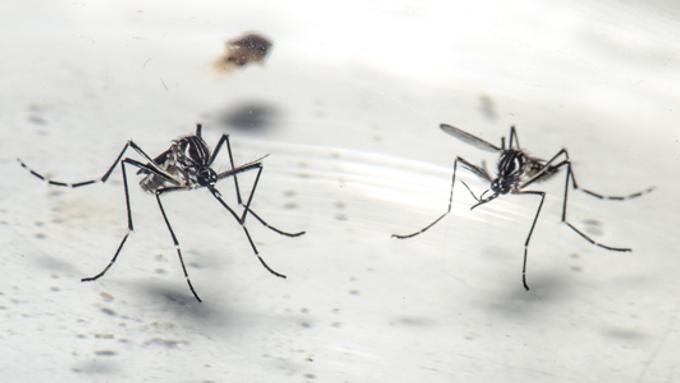 Programa pioneiro reduz casos de dengue e chikungunya em Niterói