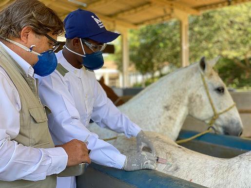 Vital Brazil, de Niterói, estuda soro contra coronavírus