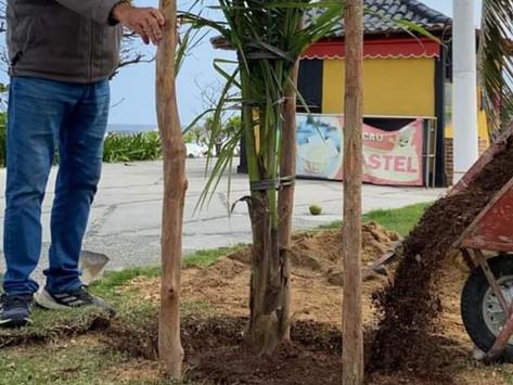 Orla de Piratininga recebe nova vegetação, parte das obras da ciclovia