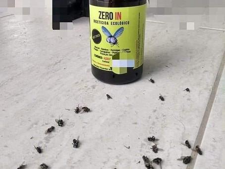 Moradores de Niterói reclamam de nova infestação do 'mosquito preto'