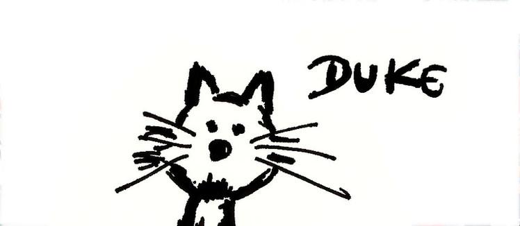 Duke, o gato