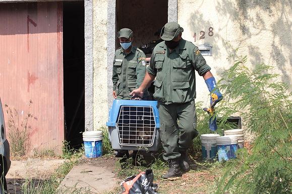 Força-tarefa resgata 43 cães que viviam em condições precárias em Niterói