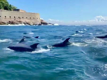 Golfinhos dão show nas praias de Niterói; uma imagem para melhorar o astral na pandemia