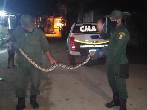 Coordenadoria Ambiental de Niterói resgatou 167 cobras em 2021