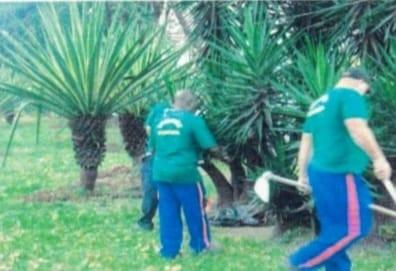 Terminal Rodoviário de Niterói planta palmeiras imperiais para mudar visual