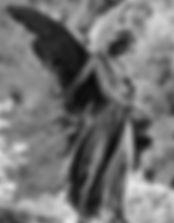 anjo-guardiao.jpg