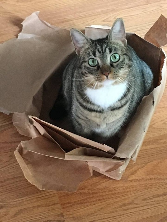 Lucky in Bag2