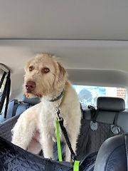 Bentley Pet Taxi2.jpg