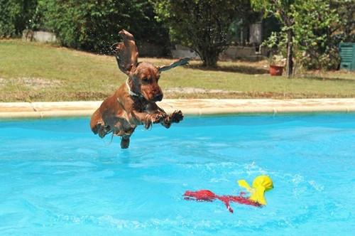 犬 プール