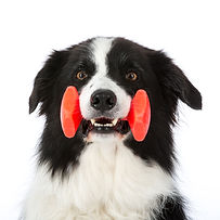 BvG_Spel_Honden op de Foto - Ernst von S