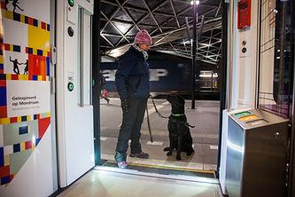 Blindengeleidehond Canine Company KNGF