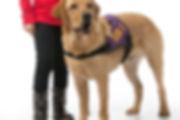 autismegeleidehond Canine Company KNGF