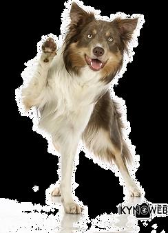 hond met een missie.png