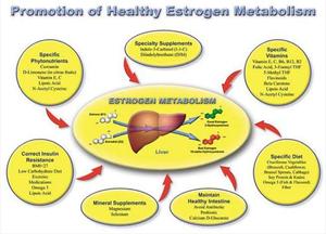 Estrogen Metabolism