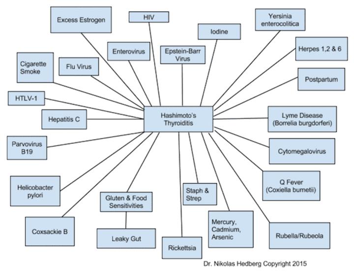 Hashimotos-Diagram.png