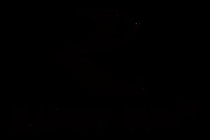 RANDY-SUN商标-黑色 png.png