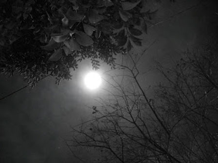 dark_night_and_moon_light_b_w_by_pfcmphotos-d2xxph6.jpg
