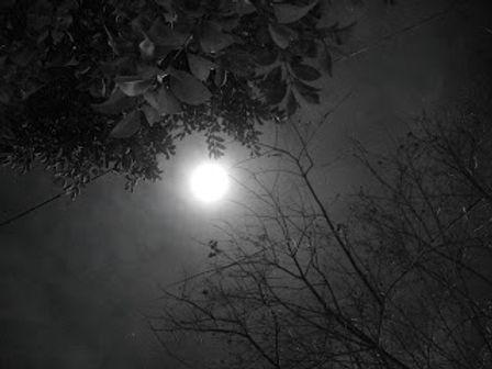 dark_night_and_moon_light_b_w_by_pfcmphotos-d2xxph6.jpg