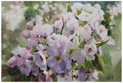 Flower_14