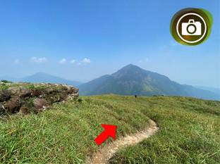 往鳳凰山方向 Towards Lantau Peak