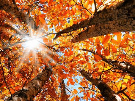 Déprime saisonnière : on fait quoi pour garder le moral ?!