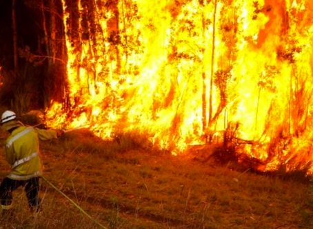 Bushfires and trauma