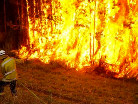 Bushfires and trauma