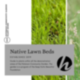 PCG Plant Guide - Native Lawn.png
